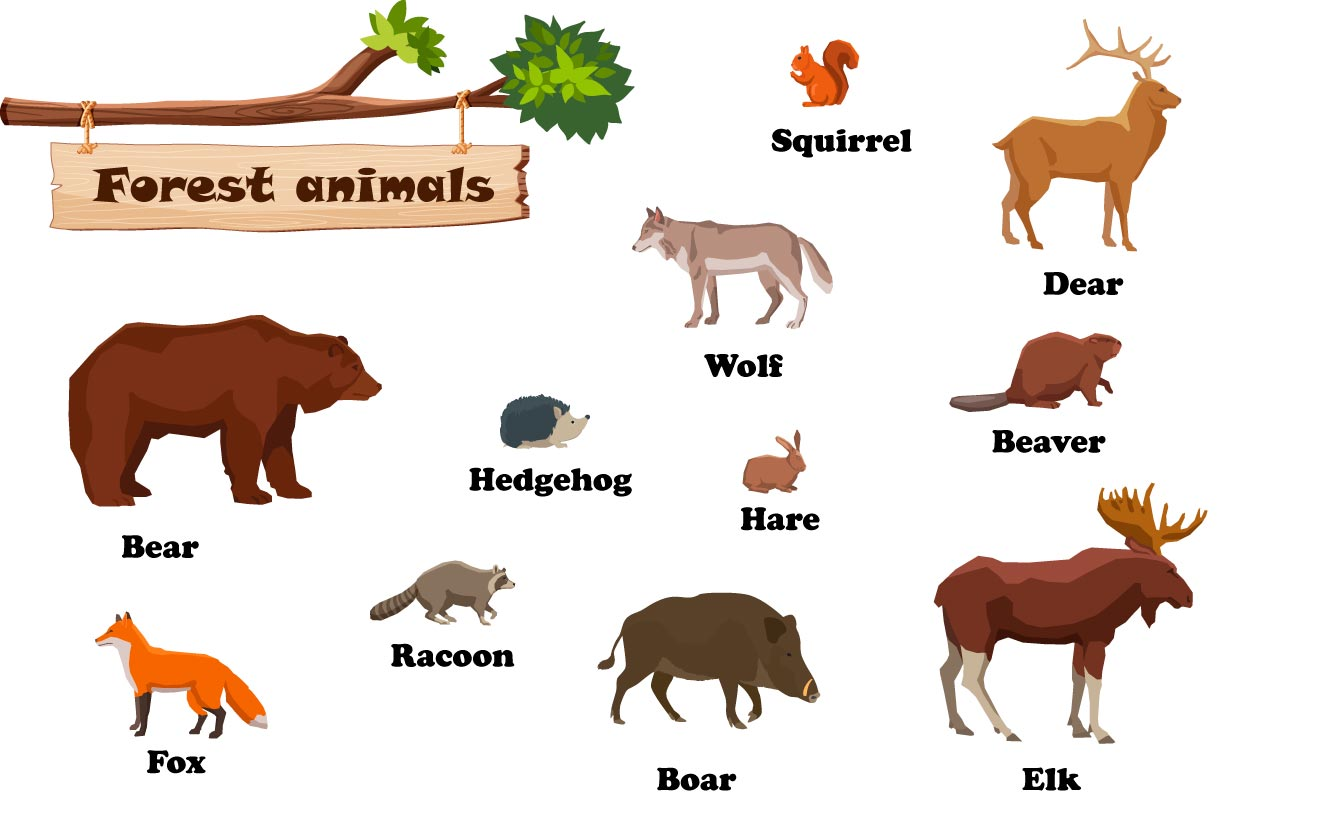 Лесные животные на английском языке