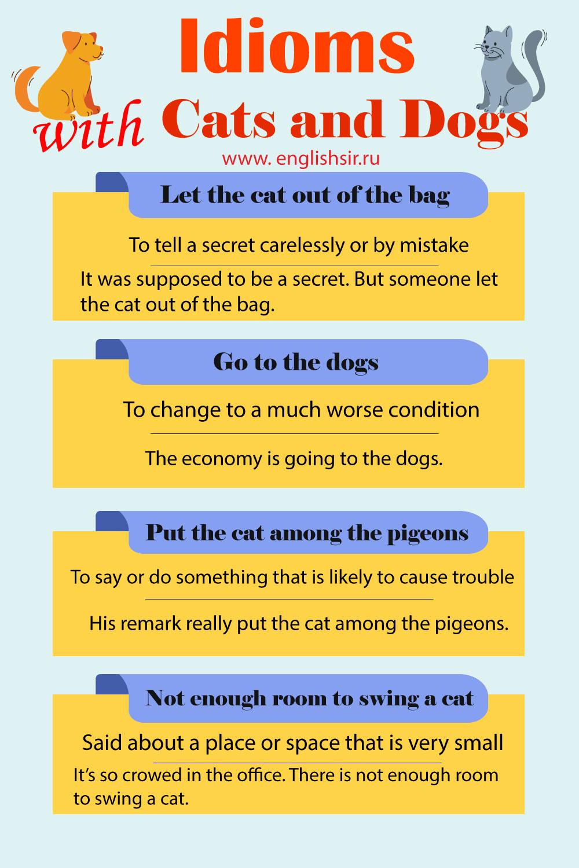 Идиомы с кошками и собаками на английском