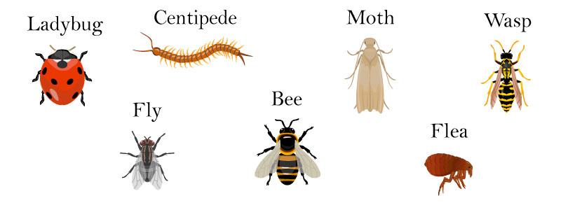 насекомые по английски