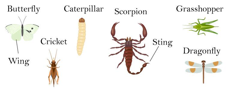 Слова на тему насекомые на английском
