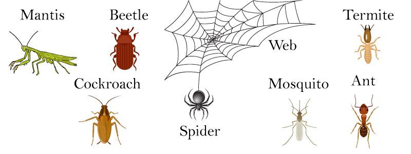 насекомые на английском